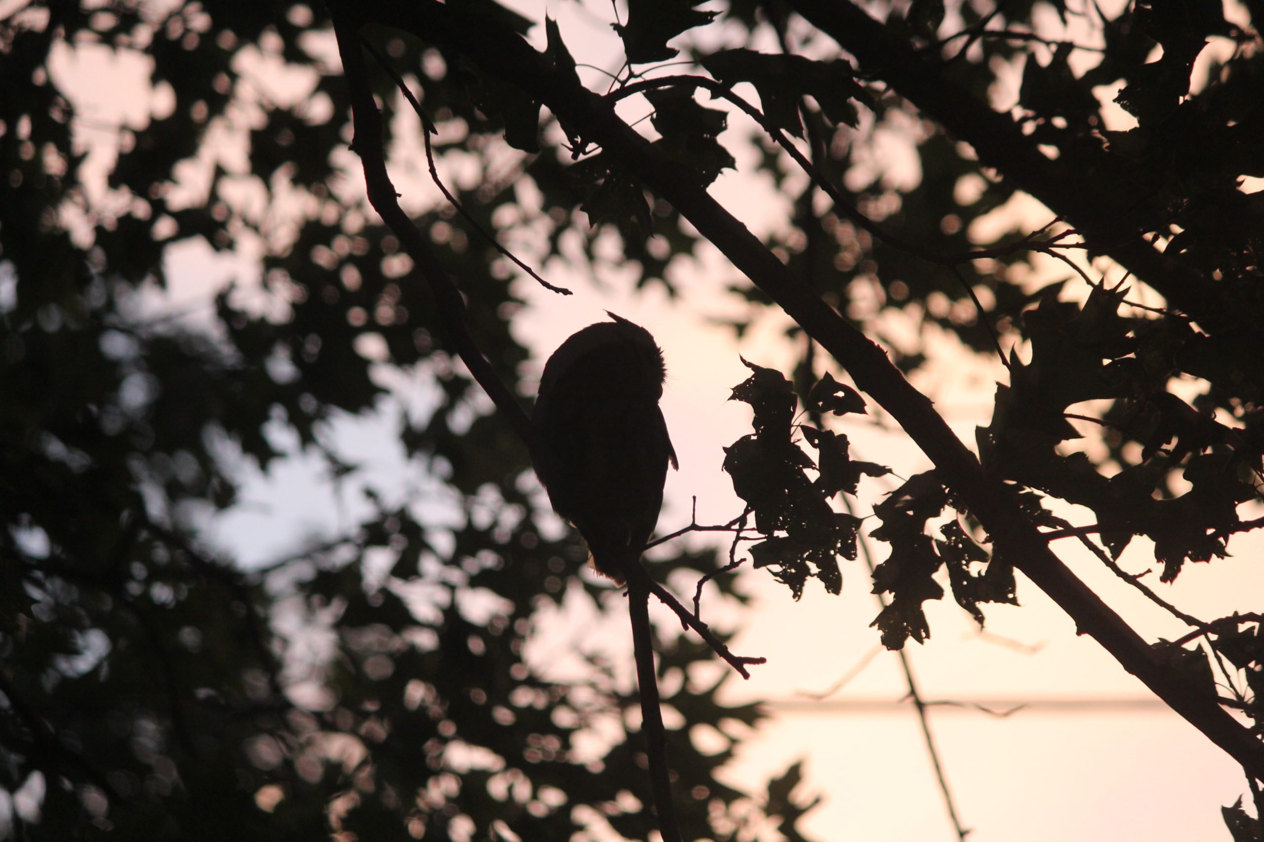 Owlets Away!
