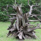 Wood Gazing